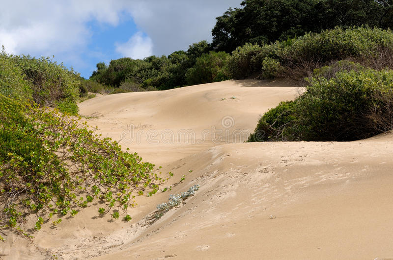 Dune landscape. East London, South Africa, dune landscape royalty free stock image