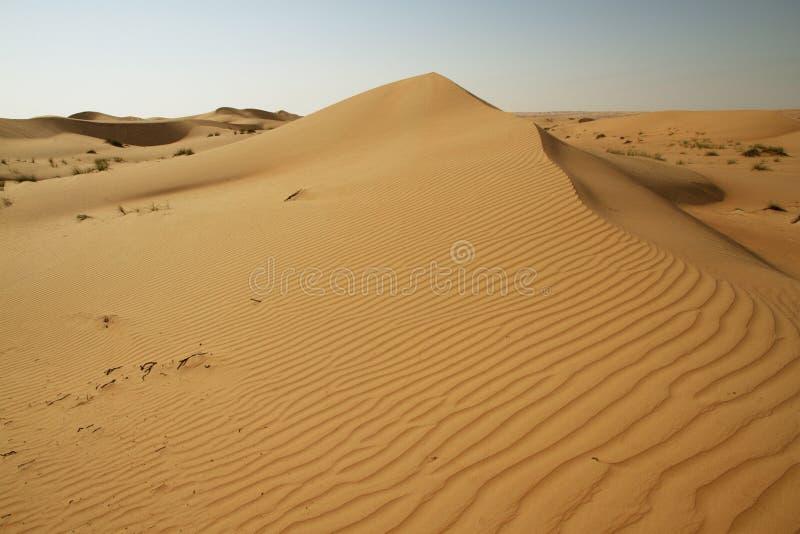 A dune landscape in the Rub al Khali or Empty Quarter. Straddling Oman royalty free stock photography
