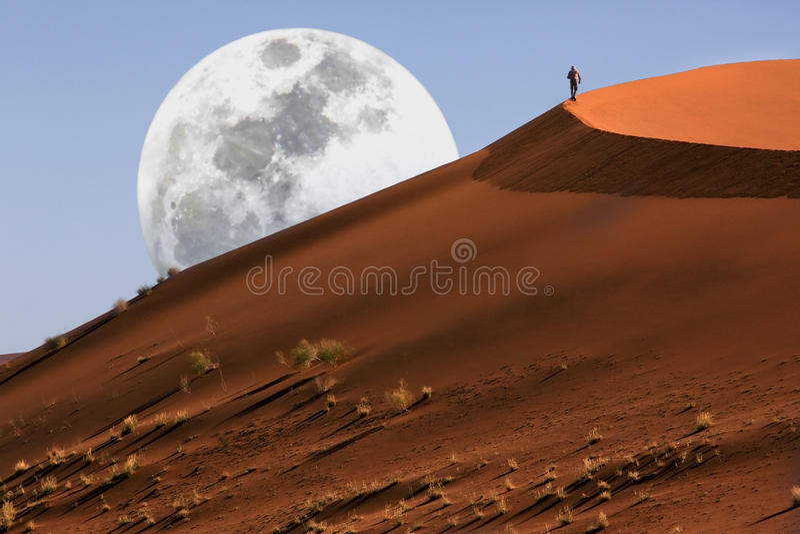 Dune marchant dans le désert de Namib photo libre de droits