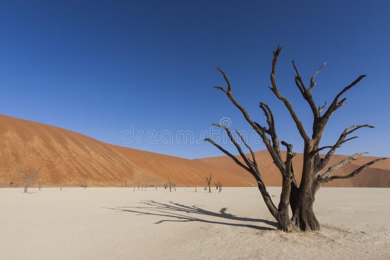 Dune morte d'arbre et de sable images stock