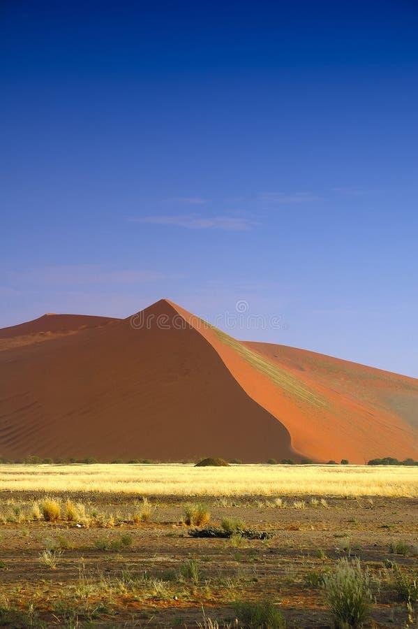Dune (Namib Desert) royalty free stock image