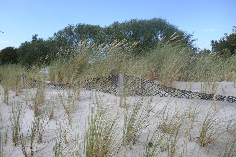 Dune protection at the Baltic Sea in Schleswig-Holstein, Germany. Sandfang and new planting with marram grass & x28;Ammophila stock photography