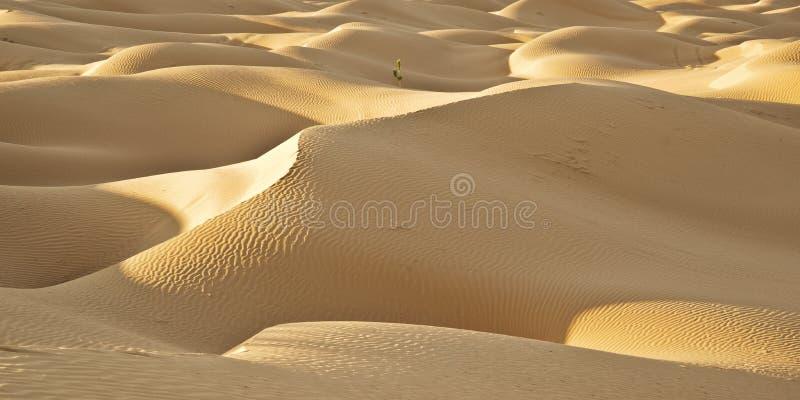 Dune sul deserto fotografia stock