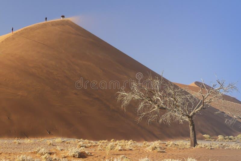 Dune 45 at sunrise Namib desert. Namibia royalty free stock photography