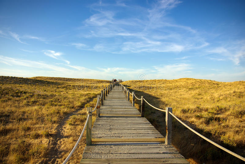Dune Walkway. Wooden walkway over the sand dunes to the beach royalty free stock photography
