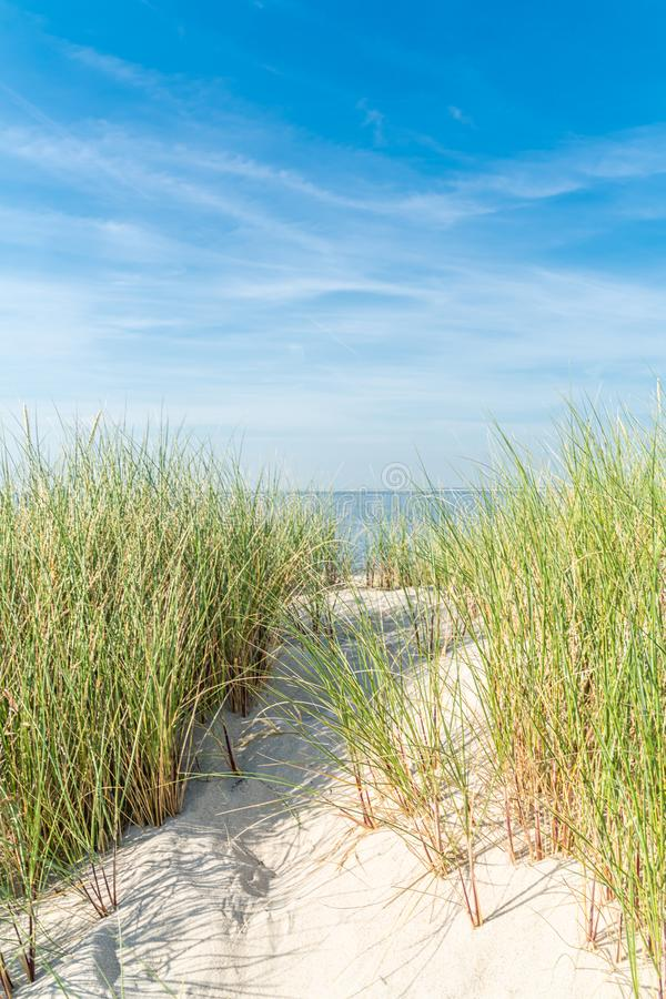 Free Dune With Beach Grass Royalty Free Stock Photos - 152501918