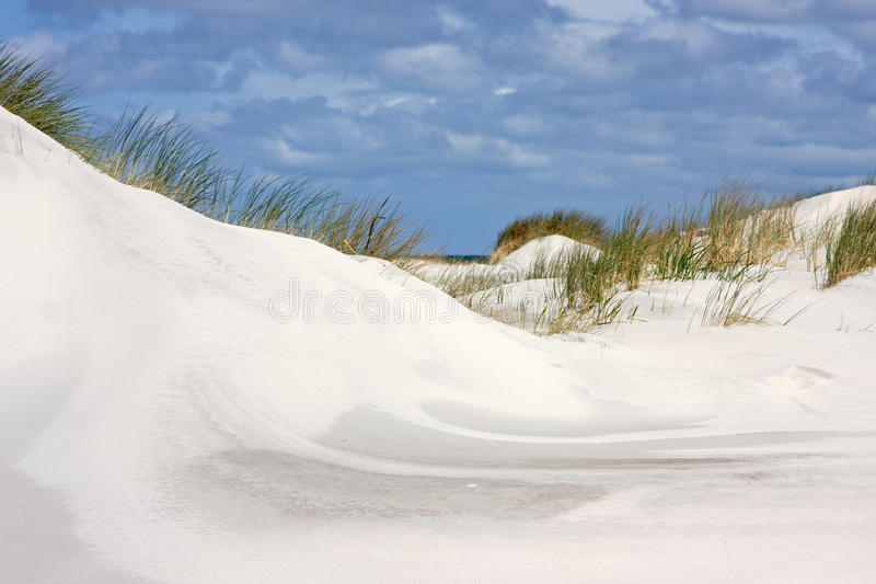 Dunes. In the Netherlands, grown with Beachgrass stock images