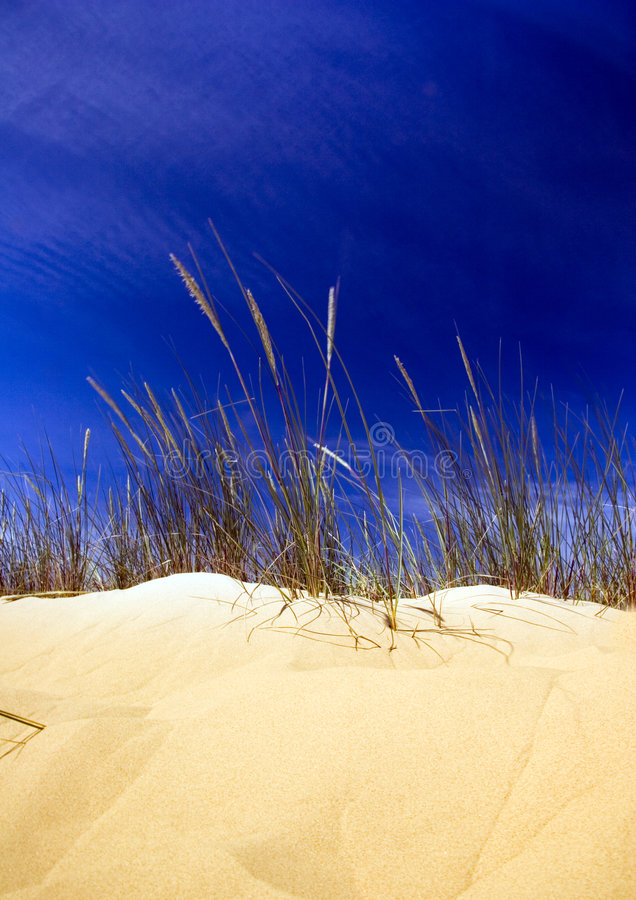 Download Dunes stock photo. Image of grit, natural, gold, background - 2110566