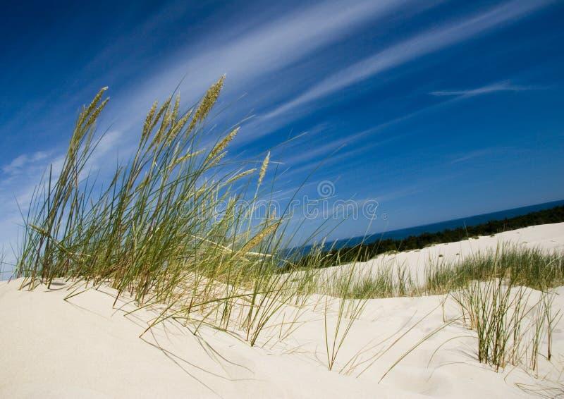 Download Dunes stock photo. Image of baltic, longitudinal, granular - 2110576