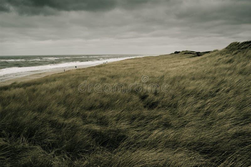 Download Dunes stock photo. Image of germany, crop, freedom, grain - 6411146