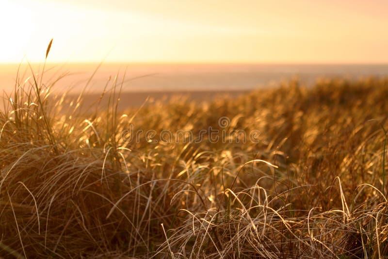 Dunes au coucher du soleil photos libres de droits