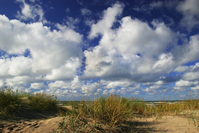 Dunes avec l'herbe verte image stock