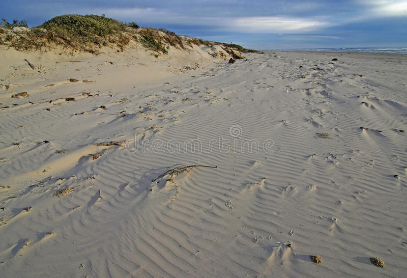 Dunes and Beach of Padre Island