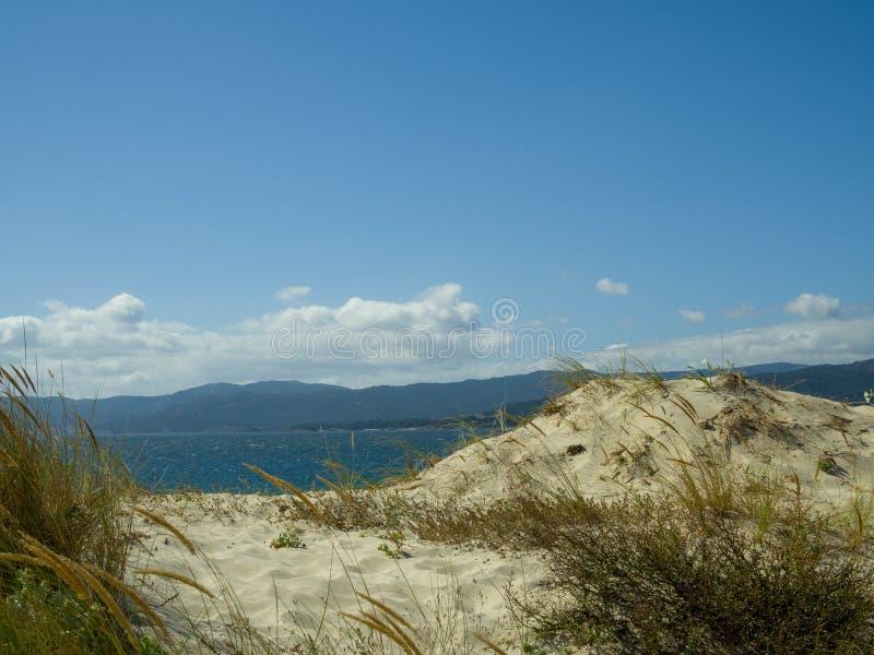 Dunes on the Beach stock photography