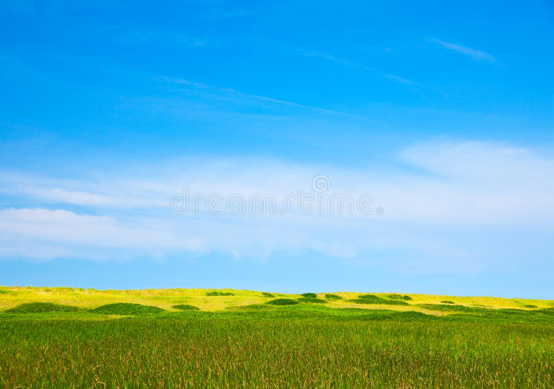 Dunes and cattails royalty free stock images