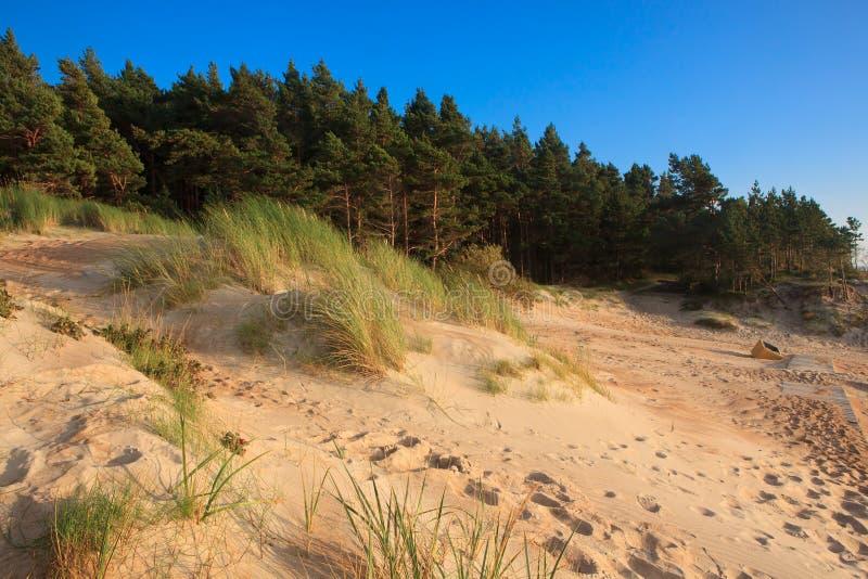 Dunes dans Palanga photos stock