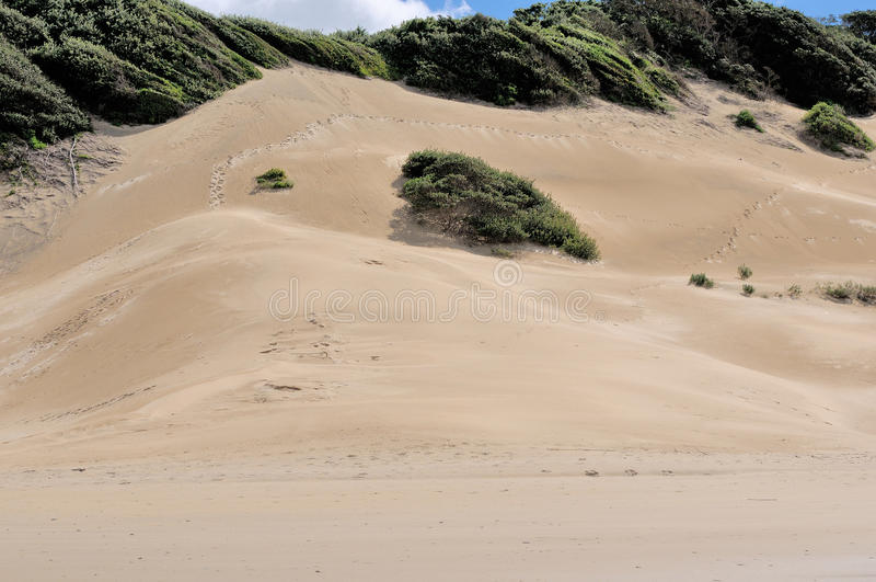 Dunes de plage à Londres est Afrique du Sud photo stock