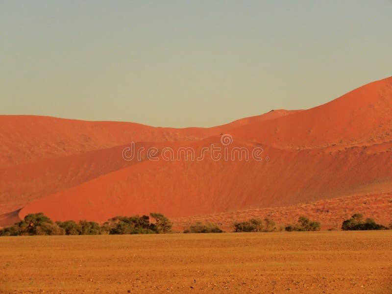 Dunes de Pnk Sossusvlei photo libre de droits