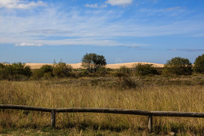 Dunes de sable à l'arrière-plan d'un champ images libres de droits
