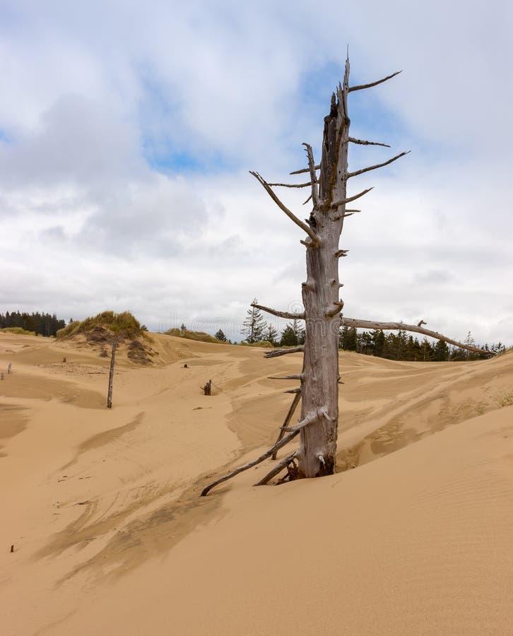 Dunes de sable 7 images stock