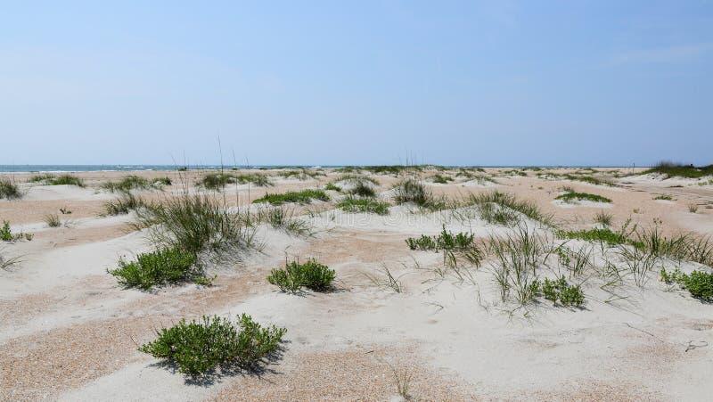 Dunes de sable avec des herbes à la plage photos libres de droits