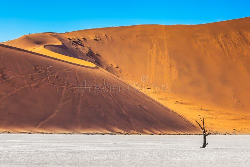 dunes de sable d'Orange-or photos libres de droits