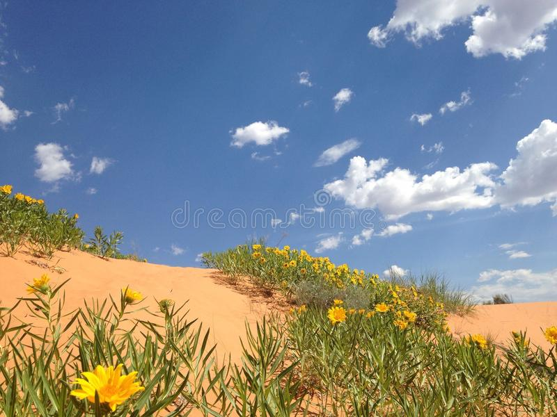 Dunes de sable de corail roses photos libres de droits