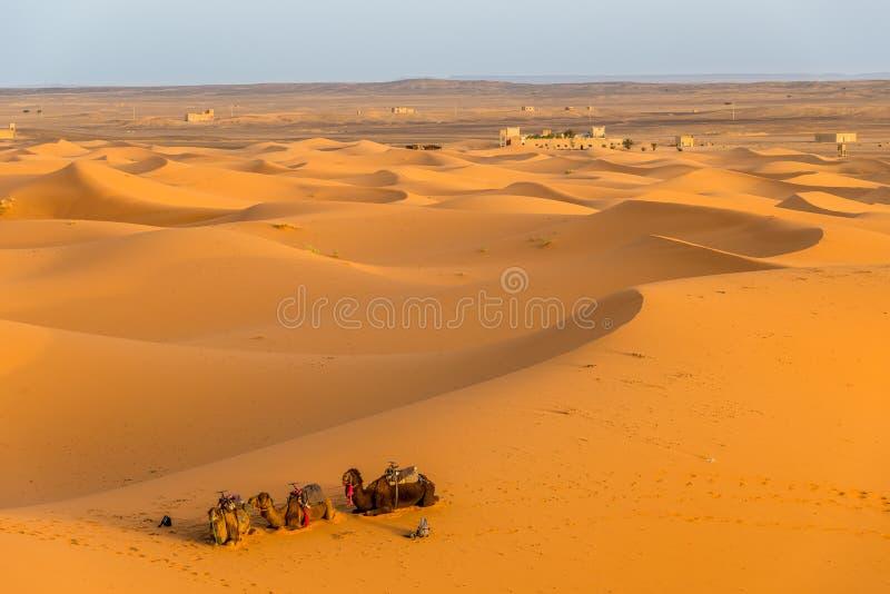 Dunes de sable de désert du Sahara dans l'erg Chebbi Merzouga de secteur photographie stock