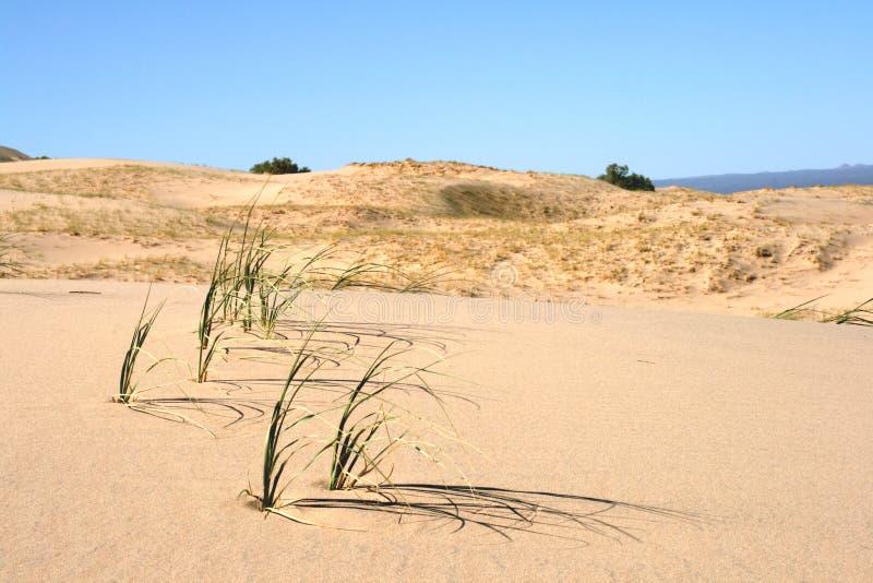 Dunes de sable de Kelso, désert de Mojave, la Californie photo libre de droits