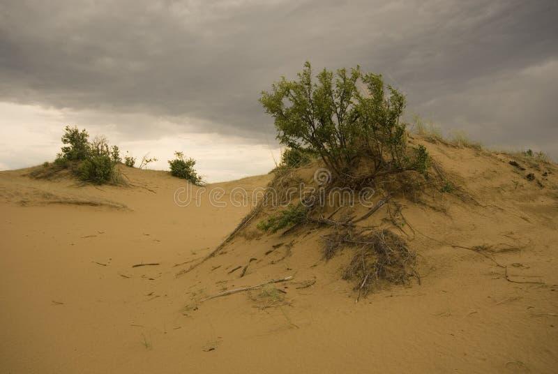 Dunes de sable de Saskatchewan photos libres de droits