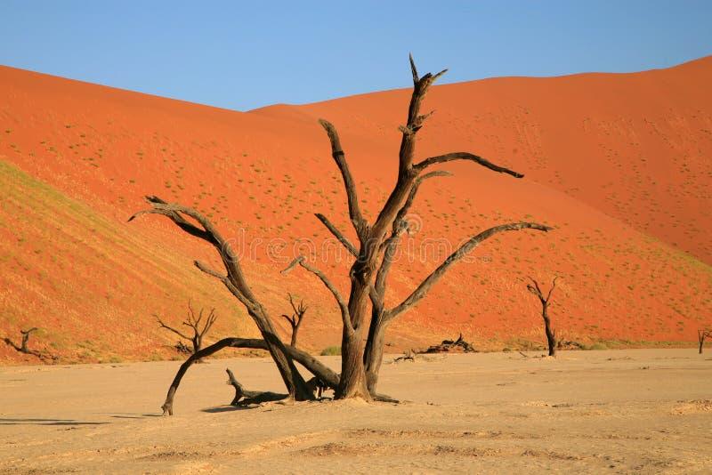 Dunes de sable de Sossusvlei image stock