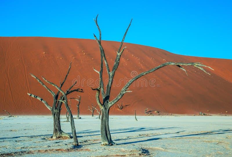 Dunes de sable oranges image stock