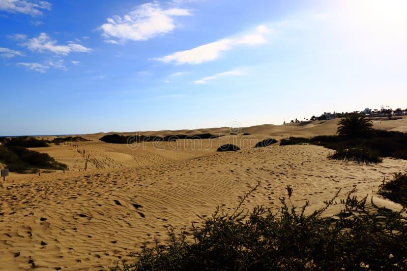 Dunes de Sandy en plage naturelle c?l?bre de Maspalomas Gran Canaria l'espagne photos libres de droits