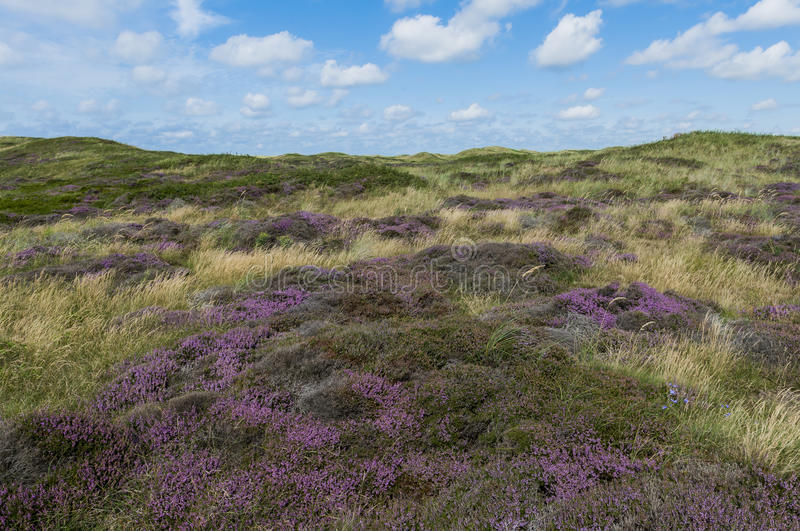 Dunes de Texel image stock