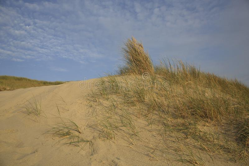 Dunes, The Netherlands stock photography
