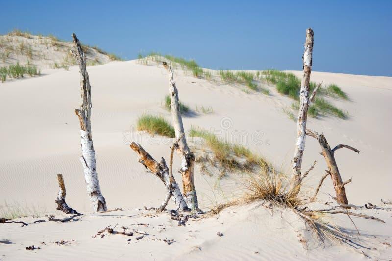 Dunes en parc national de Slowinski, Pologne photo libre de droits