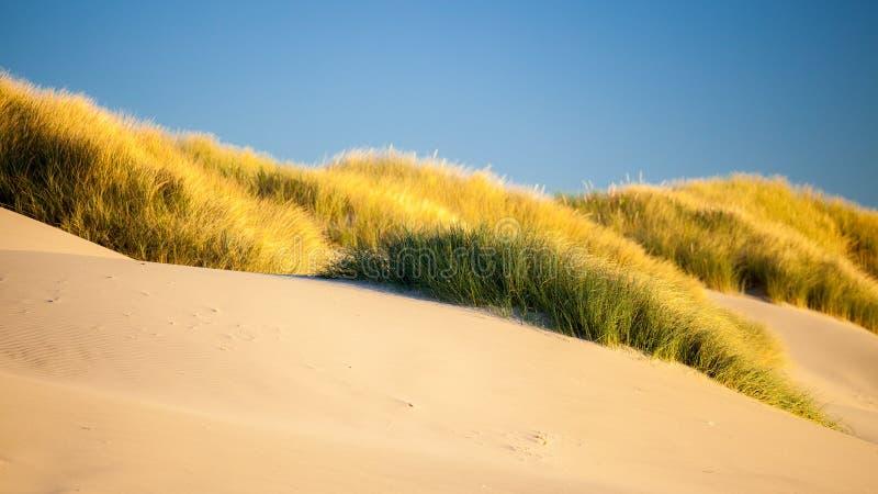 Dunes et herbes de sable sur une plage photo stock