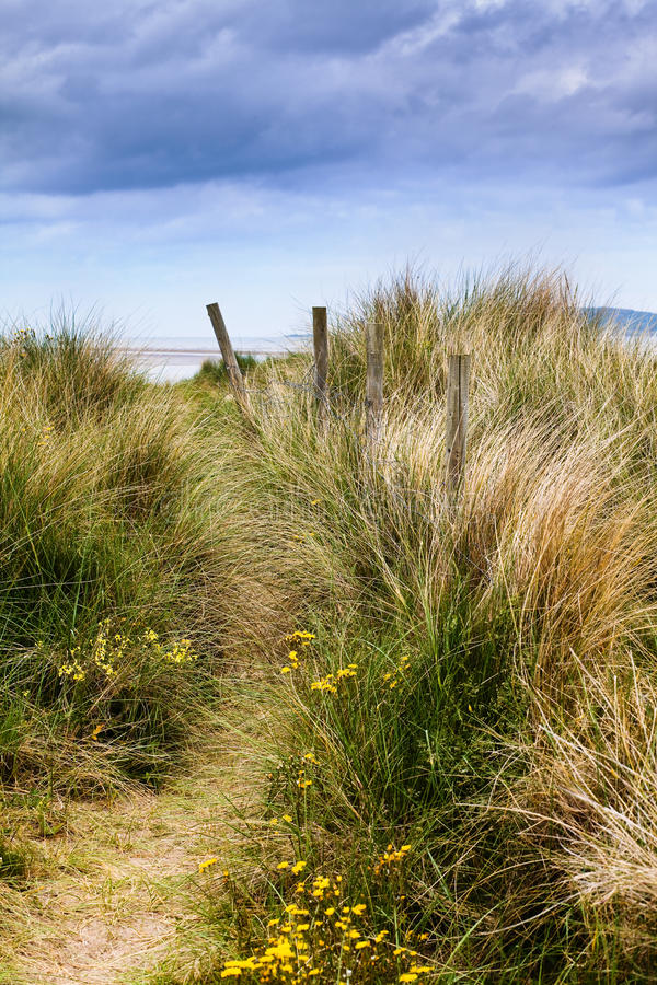 Dunes and grass royalty free stock photography