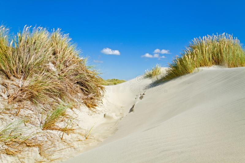Dunes with Beachgrass. Dunes grown with Beachgrass on a windy day royalty free stock photos