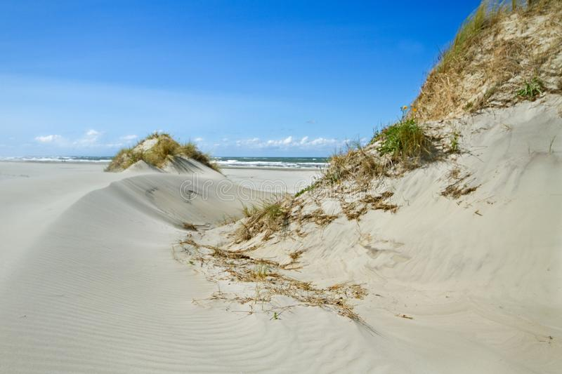 Dunes with Beachgrass. Dunes grown with Beachgrass on a windy day stock photography