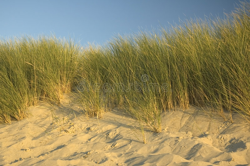 Dunes hollandaises photographie stock