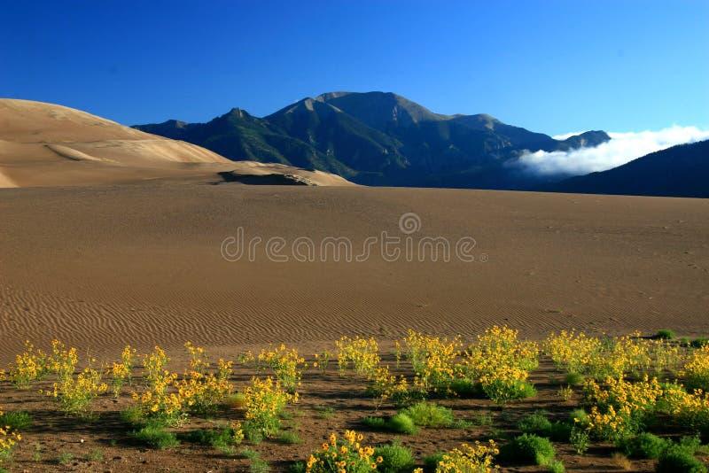 Dunes mountain clouds sunflowers stock photos