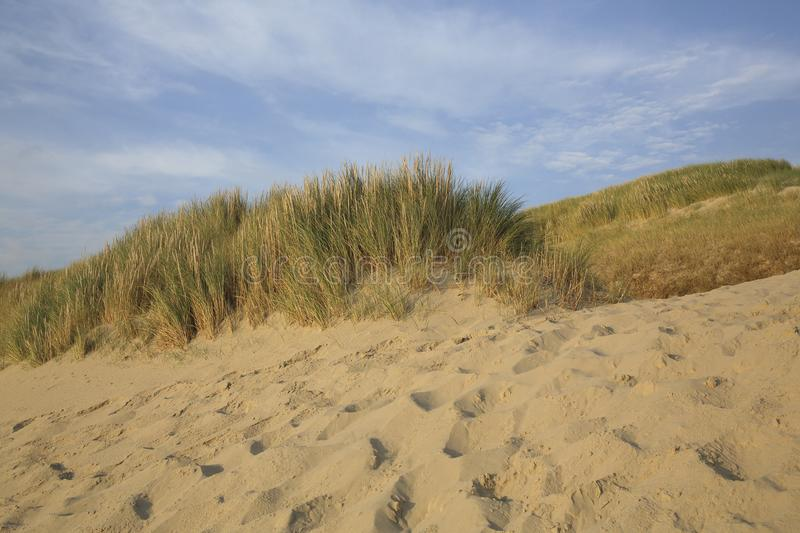 Dunes, The Netherlands royalty free stock photography