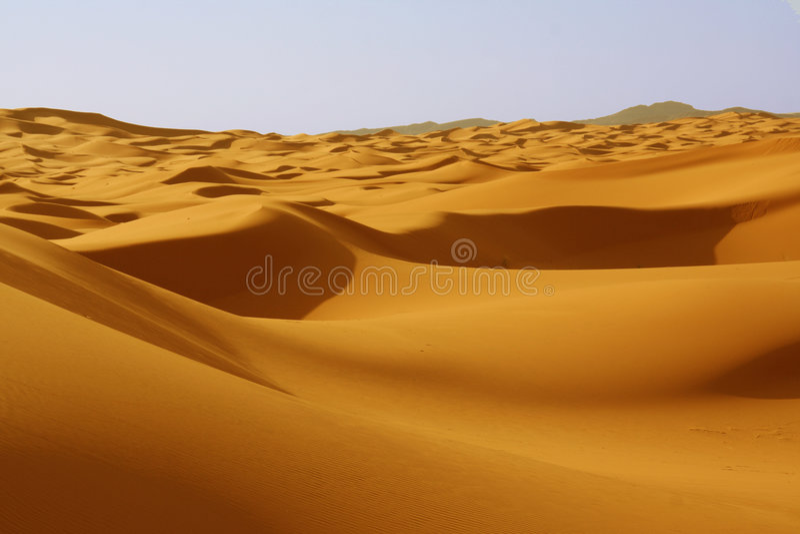 Dunes in Sahara desert royalty free stock photo