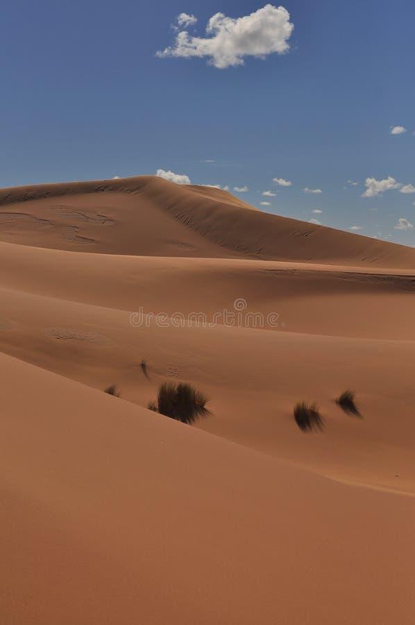 Dunes in Sahara desert royalty free stock photography