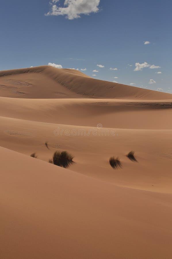 Dunes of Sahara desert royalty free stock image