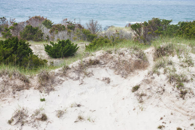 Dunes at Shackleford Banks, NC. The dunes along Shackleford Banks Island, NC stock image