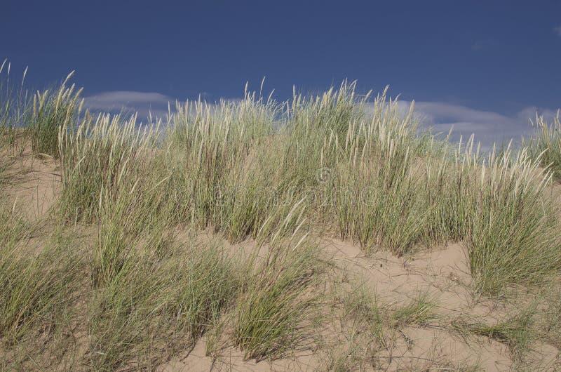 Dunes sur une plage photographie stock libre de droits