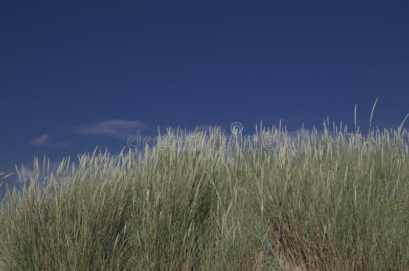 Dunes sur une plage image libre de droits