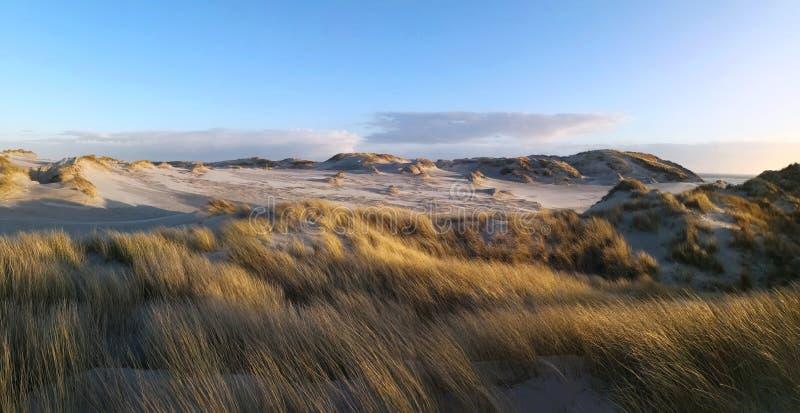 Dunescape i Amrum royaltyfri foto
